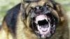 Bestia din Cuhureştii de Jos. Autorităţile locale, neputincioase în faţa unui câine care terorizează sătenii