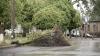 Administraţia Chişinăului estimează daunele cauzate de vântul de săptămâna trecută