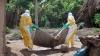 Statele Unite declară război virusului Ebola. 3000 de militari americani vor fi trimişi în Africa de Vest
