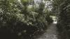 Este Chişinăul o capitală verde? Cum au reacţionat autorităţile şi cetăţenii (VIDEO)