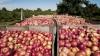 Guvernul a aprobat compensaţiile pentru producătorii agricoli. Câţi bani vor fi alocaţi din bugetul de stat