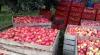 Exporturile de mere şi prune moldoveneşti în Belarus au crescut după embargoul impus de Rusia