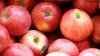 Ministerul Agriculturii a dat startul licitaţiilor la care se vor alege producătorii care vor livra mere şcolilor şi grădiniţelor