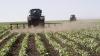 PDM: În anii 2015-2016 trebuiesc investiţii serioase în agricultură