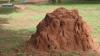 Un grup de cercetători au turnat ciment lichid într-un muşuroi de furnici. Ce a ieşit la iveală după săpături (VIDEO)