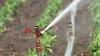 Lege fara norme de aplicare.  Agricultorii cer sa irige campurile cu apa din subteran