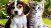 Zeci de pisici, câini şi păsări exotice au fost duse la biserică pentru a primi binecuvântarea preoţilor