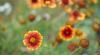 Plante medicinale şi flori frumoase, la un iarmaroc în Grădina Botanică. Preţurile sunt mai mici decât pe piaţă