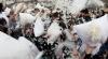 Bătaie pufoasă într-un campus universitar! Mii de studenţi s-au înarmat cu perne şi au împărţit lovituri (VIDEO)