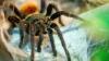O specie de păianjeni din Brazilia au fost numiţi în cinstea unui regretat membru al formaţiei The Beatles
