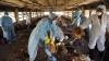 Autorităţile olandeze în ALERTĂ! Au prelungit interdicţia privind transportul produselor avicole