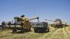 An de succes pentru agricultorii moldoveni. Recolta e mai mare decât în 2013