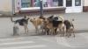 Primul centru de plasament pentru animalele fără stăpân, inaugurat la Orhei