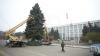 Autorităţile au găsit pomul de Crăciun. Bradul a fost oferit în dar de un agent economic