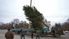 Pomul de Crăciun va fi adus în PMAN. Când va fi dat startul sărbătorilor de iarnă