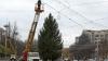 Autorităţile capitalei caută pomul de Crăciun. Nu toţi brazii găsiţi corespund cerinţelor (VIDEO)