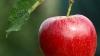 Măr imens în centrul Capitalei. Ce au fost îndemnaţi trecătorii să scrie pe el (VIDEO)