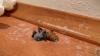 Clipul care a devenit viral pe Internet! Ce ciudăţenie iese din trupul unui păianjen ucis (VIDEO)