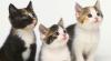 În Cipru vor fi amenajate locuri speciale unde turiştii şi localnicii vor putea să hrănească pisicile fără stăpân
