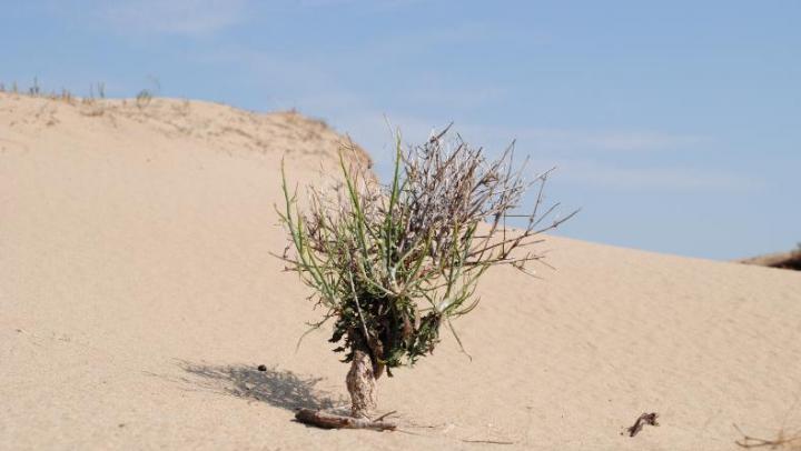 Un deșert a apărut într-o țară din Europa. Pustiul se află foarte aproape de Republica Moldova