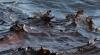 Catastrofă ecologică! Un oleoduct rusesc s-a spart în Marea Neagră