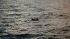 Tragedie în largul Mării Roşii: Zeci de migranţi ilegali s-au înecat