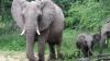 Gestul inedit al unui elefant. Clipul a devenit viral pe Internet, iar internauţii au rămas uimiţi