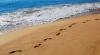 Atenţie, IMAGINI ÎNSPĂIMÂNTĂTOARE! Pe o plajă a fost descoperită o bestie înfricoşătoare