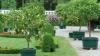 Grădină tropicală la Ialoveni. O familie creşte lămâi, mandarin, dafini și arbuști de rodii