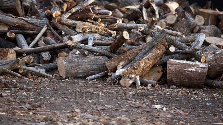 """Defrişări ilicite în Rezervaţia """"Plaiul Fagului"""". Vasile Costiuc susţine că a surprins pădurarii, în timp ce încărcau în maşini lemnul tăiat"""