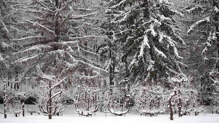 Iarnă în plină primăvară! IMAGINI UIMITOARE cu ninsoarea din luna aprilie