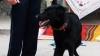 IMPRESIONANT! Un câine poliţist a depistat un hoţ din Ungheni