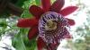 Primăvară la Grădina Botanică! Mai multe plante exotice au înflorit