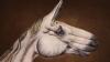 Body art în numele salvării animalelor. Mesajul unui pictor italian adresat Lumii