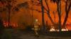 Medicii veterinari, în alertă: Zeci de animale sunt în pericol din cauza incendiilor de vegetaţie