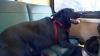 Ce-i trece prin cap unui câine din Seattle când vrea să meargă în parc