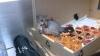 Un oposum în cofetărie. În ce stare l-au găsit angajaţii (FOTO)