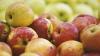 Controale mai stricte la vamă! Importul de fructe şi legume, monitorizat de vamă şi FISC