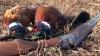 Sezonul de vânătoare la fazani expiră duminică. Vânătorii din Coloniţă au ieşit după pradă