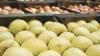 ŞANSĂ pentru unii producători moldoveni: Au liber la exportul de mere în Rusia