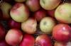 ''Iniţial mi-a fost frică''. Cum merele din Criuleni au ajuns să fie savurate în Bangladesh (VIDEO)