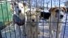 """Nu cunosc ce înseamnă """"viață de câine""""! Sute de patrupezi de rasă s-au întâlnit la un concurs internațional"""