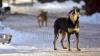 Moldovenii, ÎN PERICOL. Avertizarea medicilor privind numărul de animale bolnave de rabie
