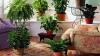 UIMITOR! Ce se întamplă dacă ai în casă plante de interior