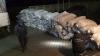 Cantitate uriaşă de ţigări şi tutun, descoperită la frontieră. Poliţiştii au deschis un dosar penal (FOTO)