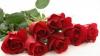 Afaceri în floare înainte de ziua îndrăgostiţilor. Câte milioane de trandafiri au fost vândute
