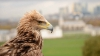 Cum se vede oraşul Dubai, DE LA ÎNĂLŢIME. Un vultur imperial îţi arată (VIDEO)