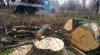 Reparaţia durează ani de zile pe strada Vasile Alecsandri. Oamenii, nemulţumiţi că se taie copacii