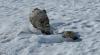 Mumificaţi de avalanşă. Doi alpinişti din Mexic au fost găsiţi peste jumătate de secol