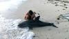 Doi delfini au fost salvaţi cu succes în Australia (VIDEO)
